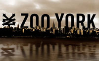 Zoo York Watches On Sale